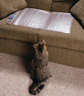 Kot Sika Na W Kanapę Blog Warujpl