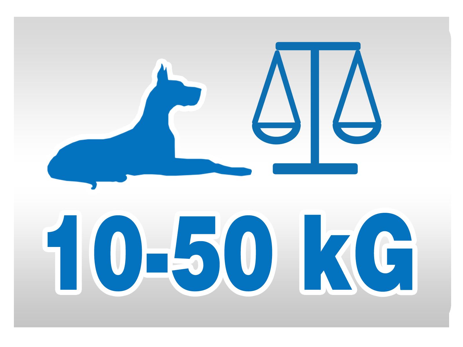 System przeznaczony dla średnich oraz dużych psów