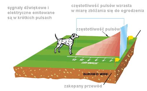 częstotliwość bodźca pastucha